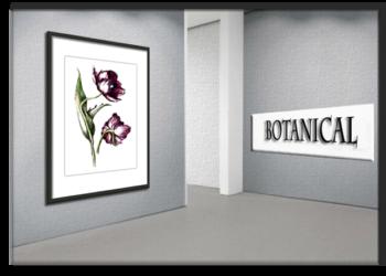 Botanical drawings by artist Danuta Bennett